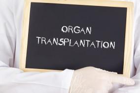 organi2